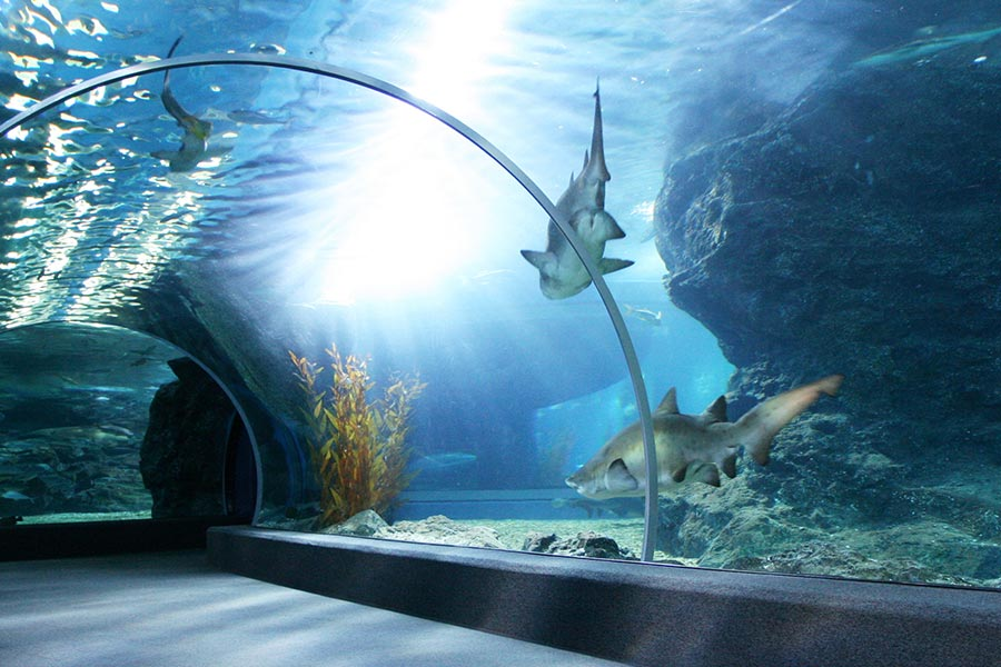 Ripley's Aquarium is an 85,000 sq.ft. aquarium located in Broadway at the Beach. Some of the attractions include a pacific giant octopus, tarpon, sandtiger sharks, green moray eels and more.