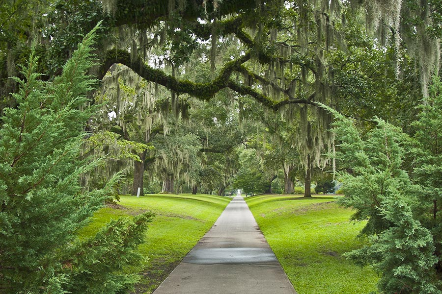Beautiful shot of Brookgreen Gardens with its massive oak trees. Many of the oaks are 200-300 years old.